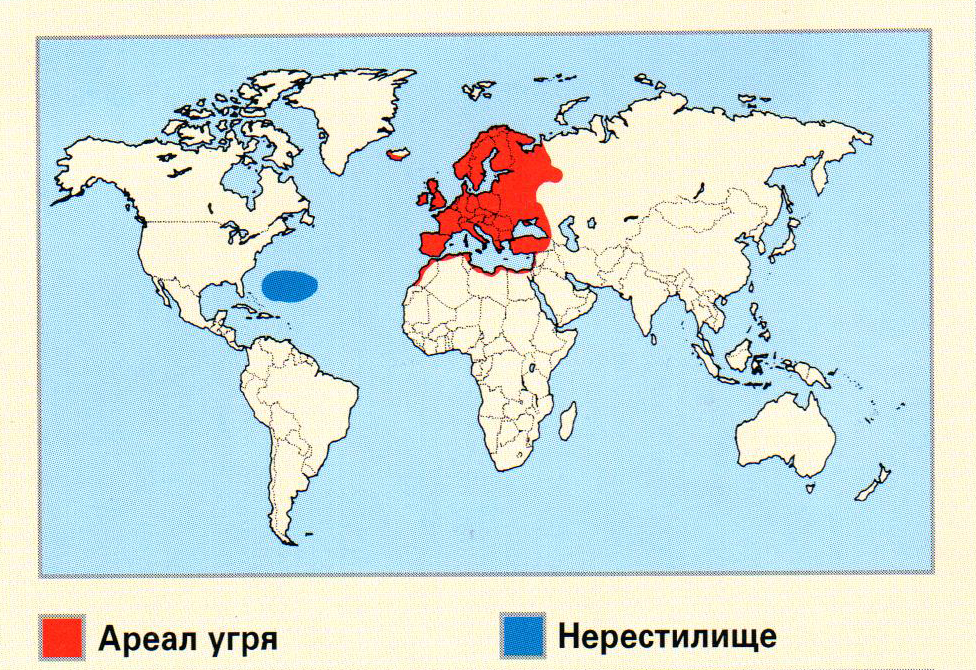 Угорь ареал обитания на карте